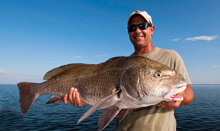 Sight-Casting to Florida Giants - Black Drum in TampaBay
